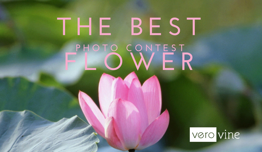 Best Flower Photo Contest