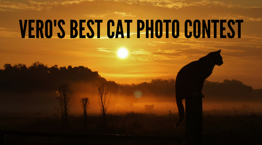 Vero's Best Cat Photo Contest