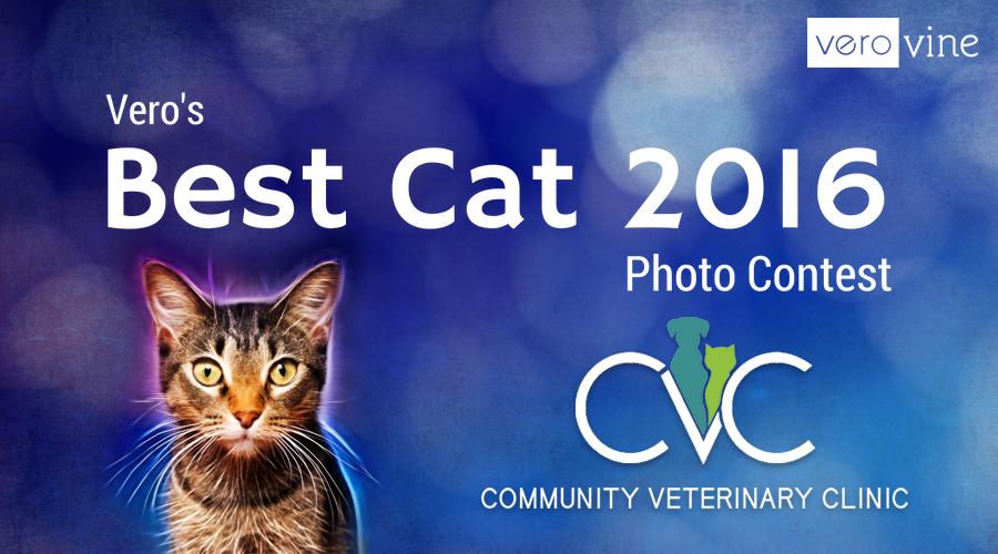 Vero's Best Cat Photo Contest 2016